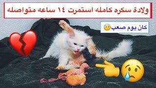 قطه تلد بعد عناء دام ١٤ ساعه متواصله من الألم 💔😢 / Mohamed Vlog