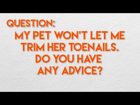 2 Simple Tips for Trimming Your Dog or Cat's Nails