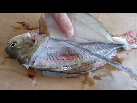 How to Fillet a Surf Perch