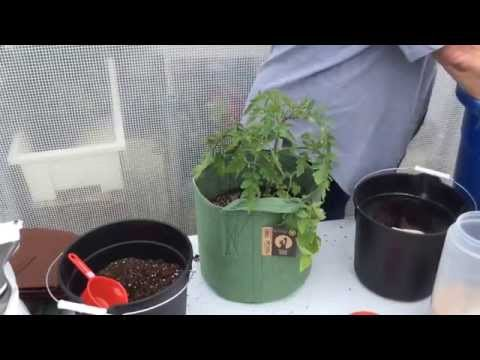 How To Plant Patio Tomatoes In 5 Gallon Root Pouch Grow Bags!