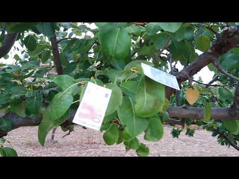 Greece visit  Euro tree