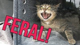 Why are some cats FERAL?