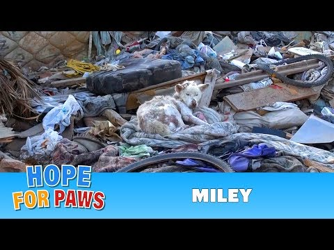 Hope For Paws: A homeless dog living in a trash pile gets rescued, and then does something amazing!