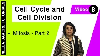 Cell Cycle Cell Division Mitosis Part 2