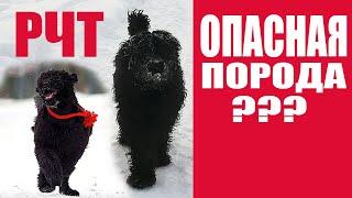 Потенциально опасные породы собак??? Или неадекватные владельцы? Часть 2