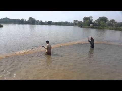 Fish Farming nd Hiechry Ch Fish Form Khanwali