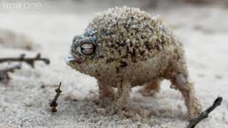 A Very Angery Frog
