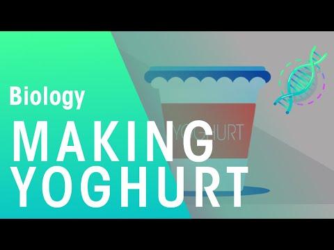 Making Yoghurt   Biology  for All   FuseSchool