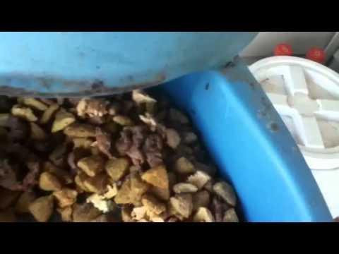 ANTS EAT DOG FOOD?