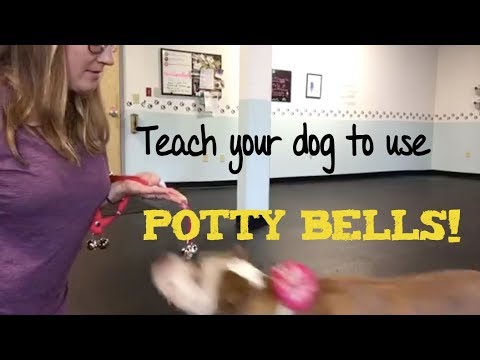 Potty bells- Training Tips Tuesdays