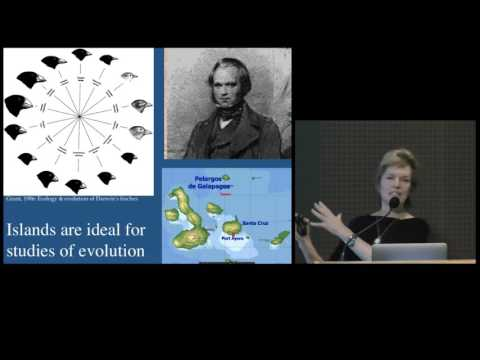 Ecology, Evolution, and Species Diversification in Hawaiian Islands