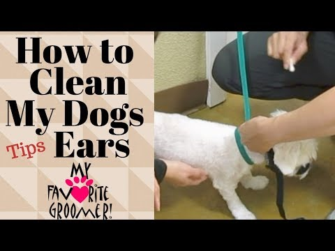 How to clean my mean Dogs ears at home