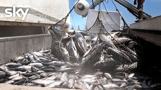 Sky Ocean Rescue: Overfishing threatening paradise