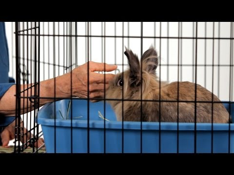 How to Make a Rabbit Less Aggressive | Pet Rabbits