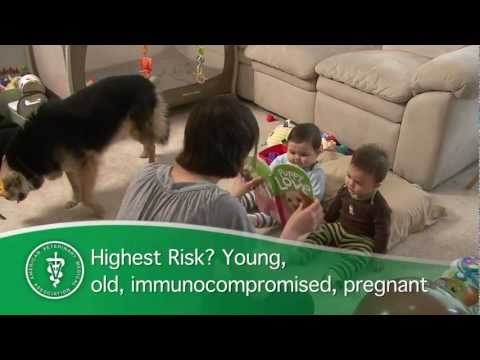 Superbugs and your pet