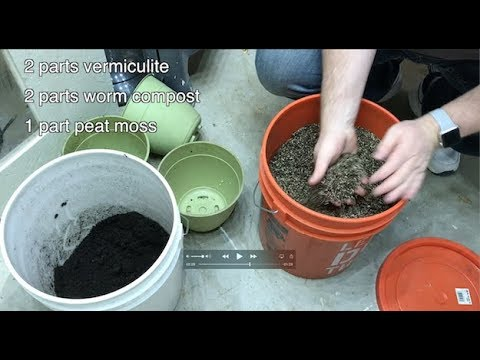 Potting Mix Formula for Seedlings and Large Indoor Plants