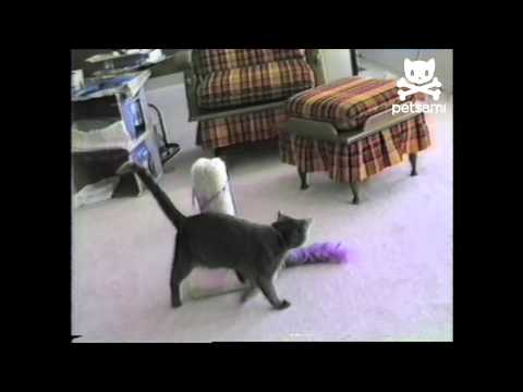 Static cat struggles with balloon