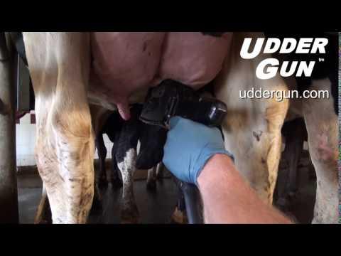 Udder Gun Close Up Teat Scrub