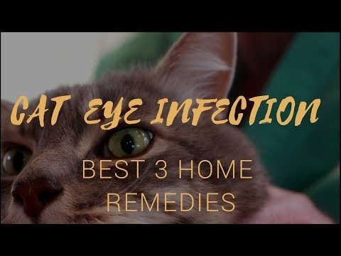 Cat With Infected Eye? Best 3 Holistic Remedies