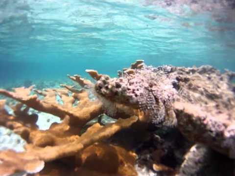 Snorkel-Bahamas.MP4