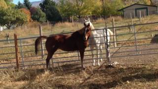 Horse galloping and neighing