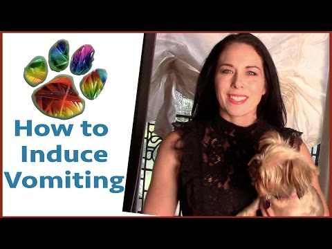 How to Induce Vomiting in Dogs