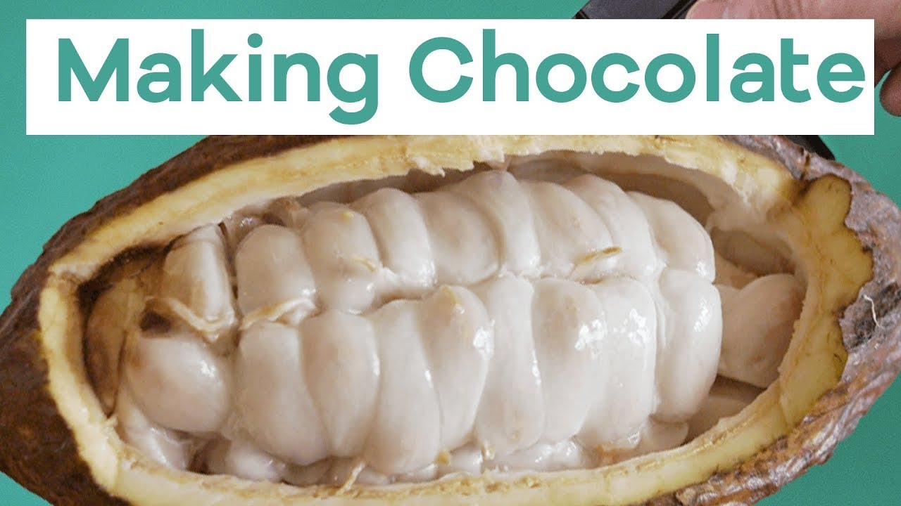 Making chocolate is a lot more disgusting than you think