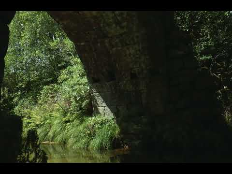 Gentle Flowing River under an Ancient Bridge: Birds Singing and Water Sounds