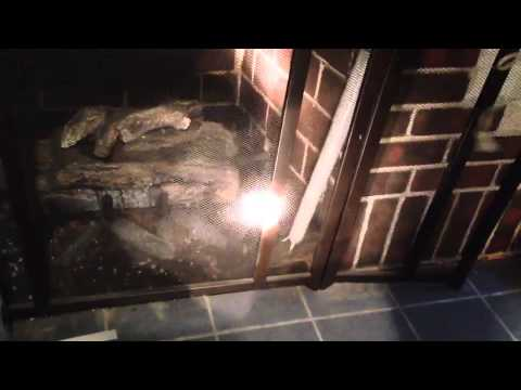Squirrel in the chimney- how to remove.
