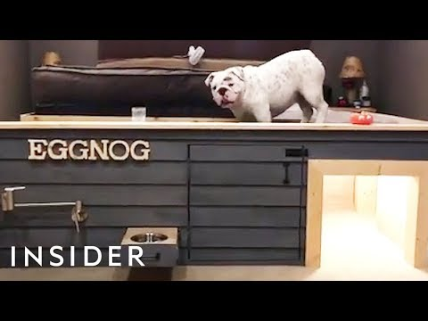 Bulldog Dog House Is Probably Better Than Your Apartment