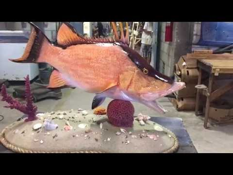 Hog Snapper mount on custom sand base - Gray Taxidermy Fishmounts, Custom fish reproductions