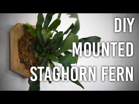 How to Mount a Staghorn Fern : DIY