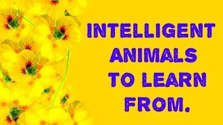 We Must Learn From These Animals!