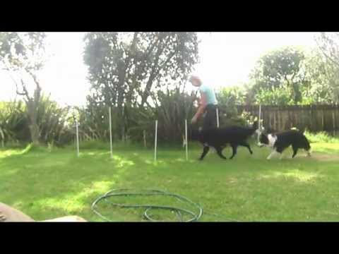 BackYard Dog Agility DIY Run, Beginners Homework