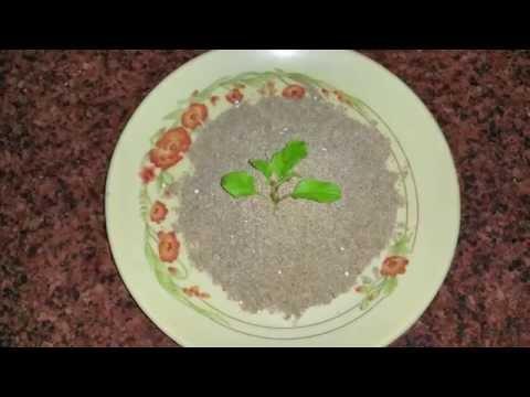 धनियां की पंजीरी   Dhania Panjiri Prasad Recipe