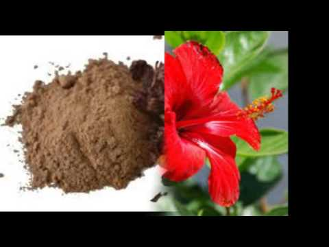 Benefits of shikakai hair wash powder