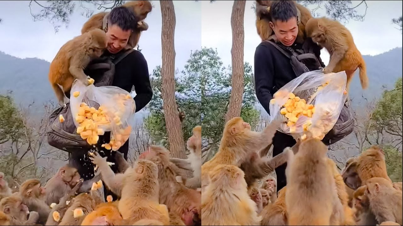 Thank you for Monkey lover That Donated A lot Of Food To Hungry Monkeys