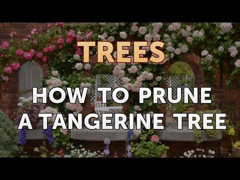 How to Prune a Tangerine Tree