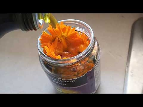 Make Your Own Calendula Oil Infusion
