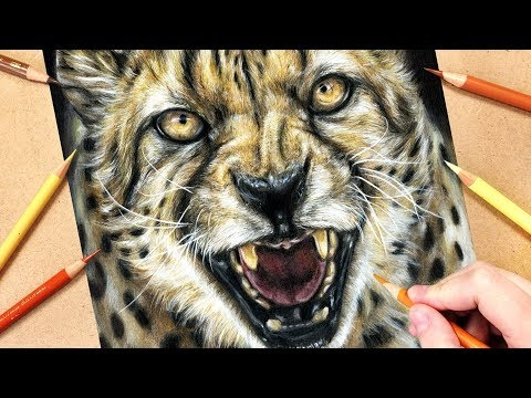 How to Draw a Cheetah using Coloured Pencils | Realistic Animal Drawing Tutorial