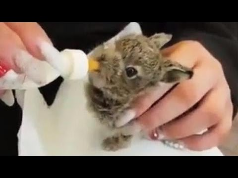 Baby hare snatched up, saved from deep snow at Dublin airport