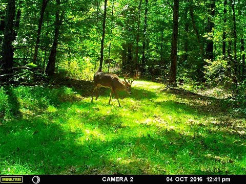 Excellent Hunting Land in Hopkins County Kentucky - 125 Acres