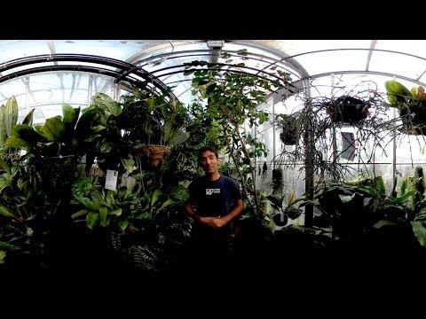 UC Davis in 360 Video: Botanical Conservatory