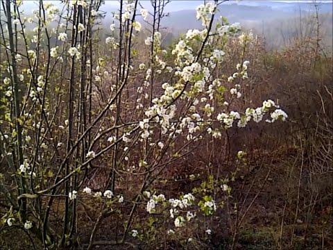 How to Keep from Losing Fruit, When Trees Blossom Too Early (in February!)