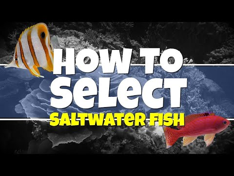 HOW TO: Selecting Saltwater Fish for Beginners