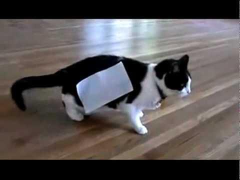 Cat + tape = Experiment