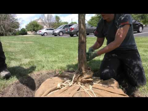 Best Practices - Tree Planting Part 2
