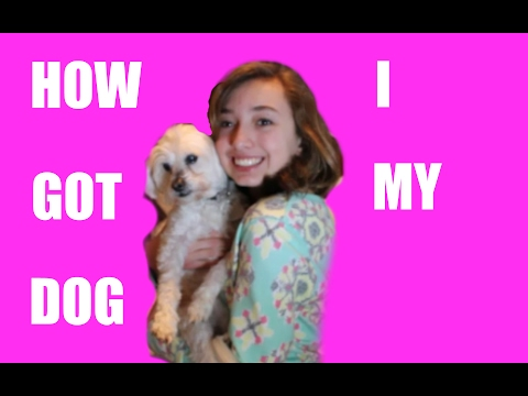 How I convinced my parents to let me get a dog! +Tips
