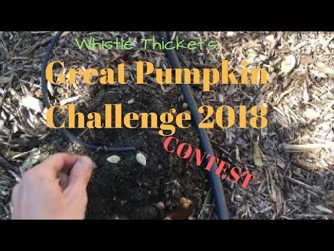 Whistle Thicket : Great Pumpkin Challenge 2018