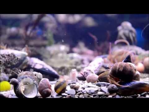UK Cold saltwater rock pool aquarium, Hermit crab new home